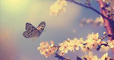 Schmetterling im Sonnenuntergang im Anflug auf eine Blume